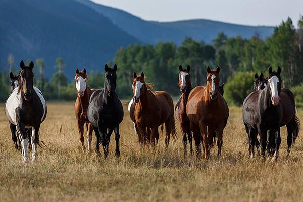 Rama Ranch horses