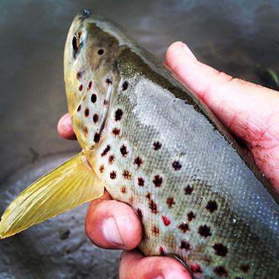 Rawah Ranch fishing