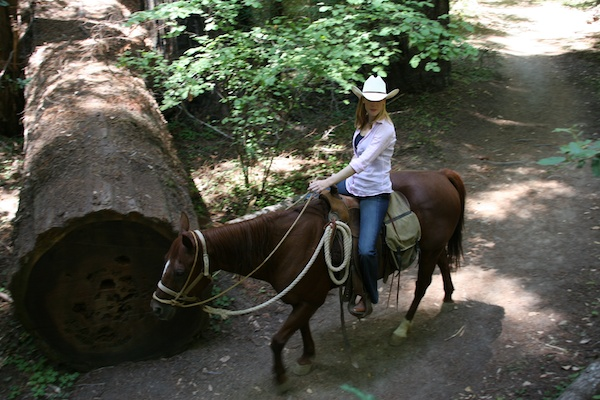 Redwoods horse ride
