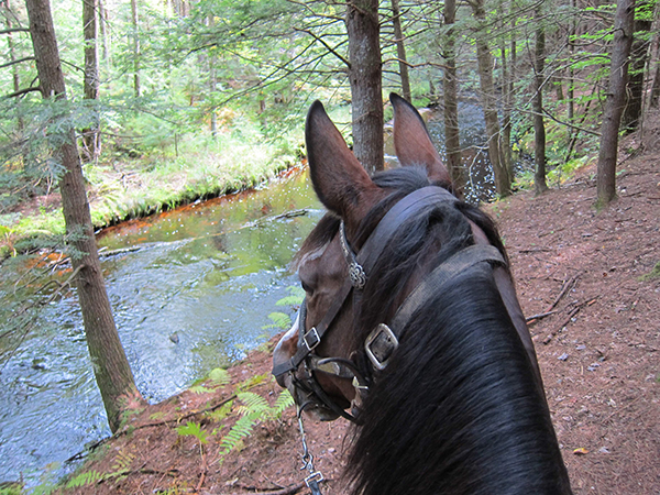 horseback riding at bear brook new hampshire