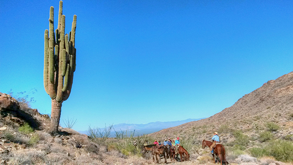 Stagecoach trails guest ranch arizona horse riding