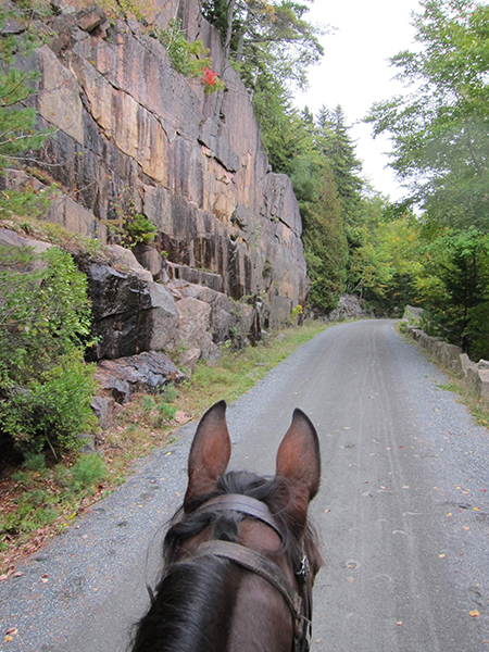 horseback riding the carriage trails acadia national park