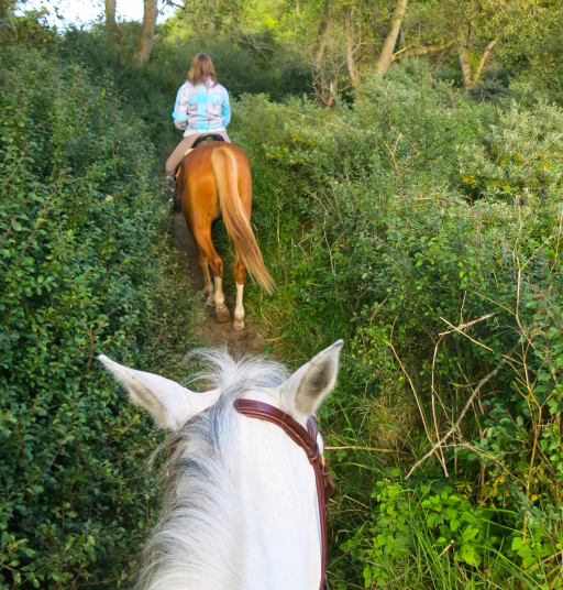 Horseback Riding Through Blackberries Belgium