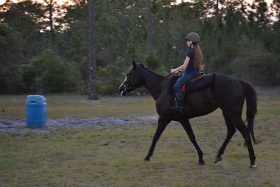 riding florida trails all hitched up