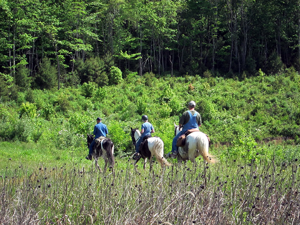 riding horses west Virginia tourism