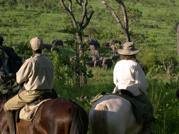 Mavuradonha Mountains elephants