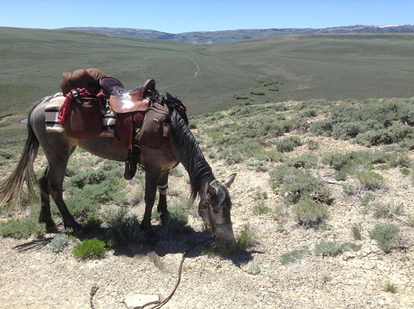 Horse grazing on the Oregon Trail