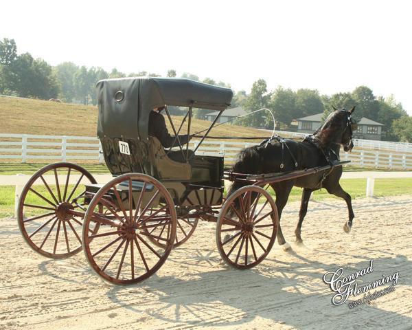 Rocky Mountain Horse buggy