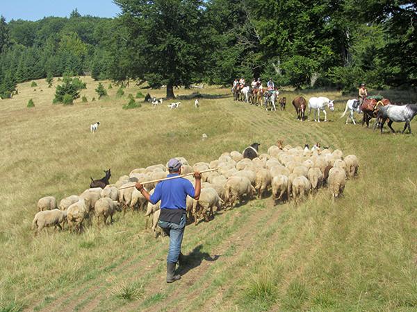 Romania sheep herders