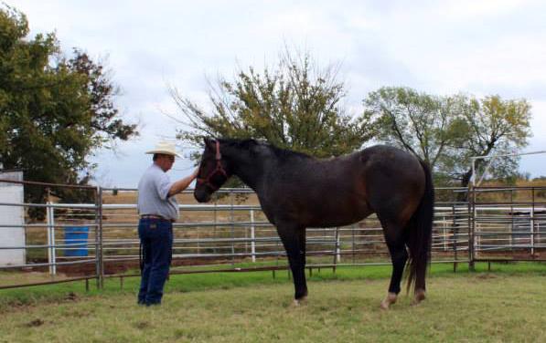 Ronnie Ford Natural Horsemanship