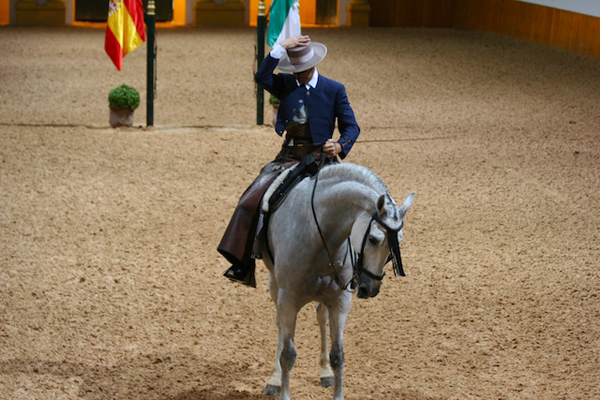spain's royal andalusian school of equestrian arts