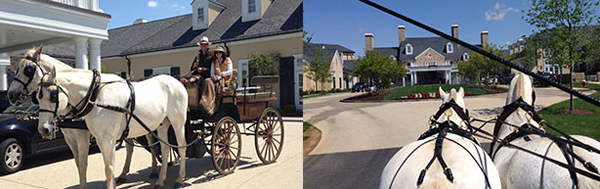 Salamander Resort horse drawn carriage