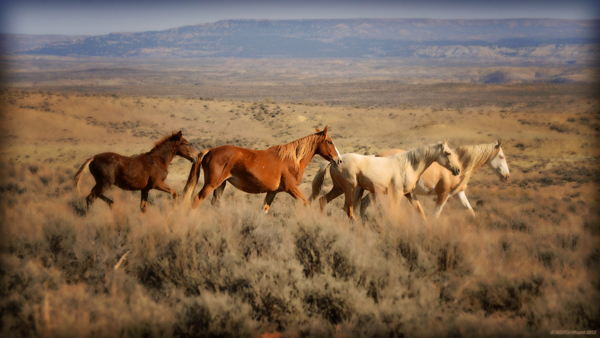 sand wash basin jim westin photos colorado wild horses