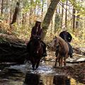 Shangrila Guest Ranch Virginia