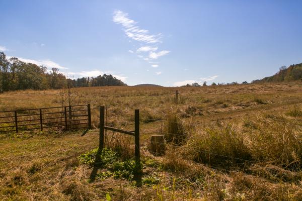 pasture at shel clair farms