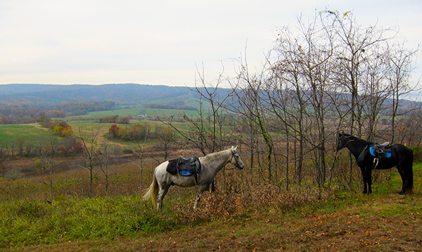 Sky Meadows State Park Horseback Trail Views