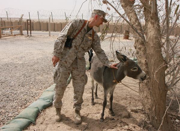 Smoke the Donkey Iraq