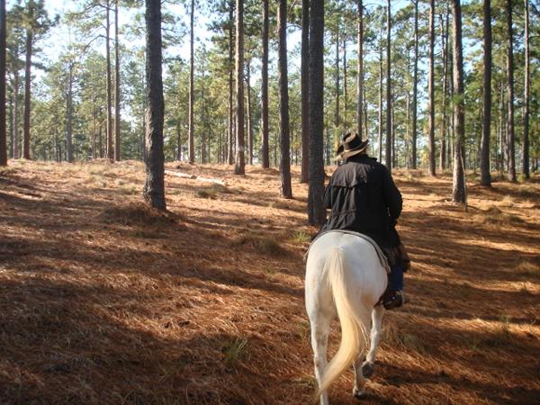 south carolina horse trails
