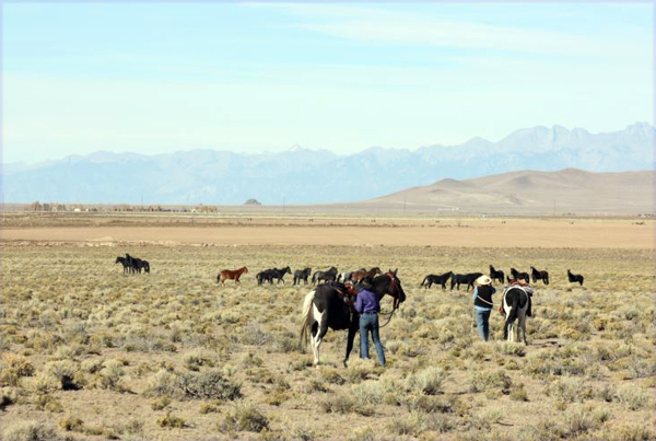 spotted horse ranch wild horse tours colorado