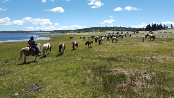 the horse drive continues along Big Lake in Arizona run by Sprucedale Guest Ranch