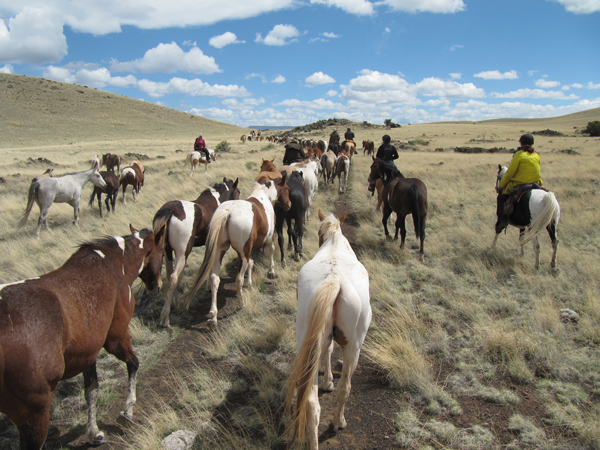 a horse drive in the vast fields of Arizona being run by the Sprucedale Guest Ranch