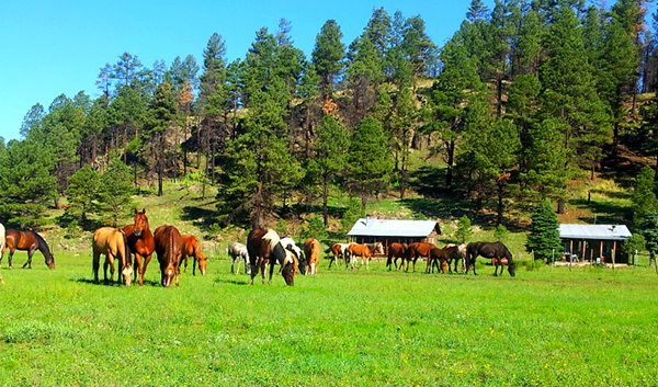 dude ranch blog 10 things to love about arizona ranch