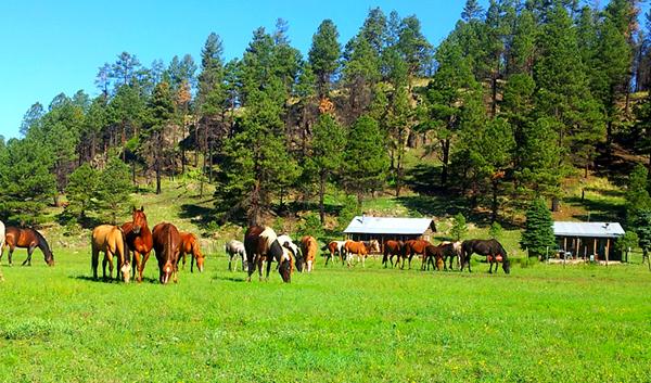 sprucedale ranch arizona