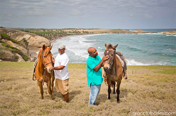 st lucia horses