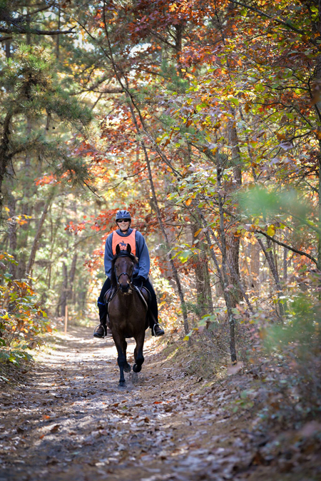stacey stearns rides her morgan horse john on a trail in new jersey