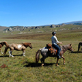 stone horse travel in mongolia