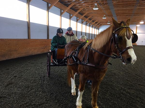 Susan Rogers Carriage Driving at Land's End Farm