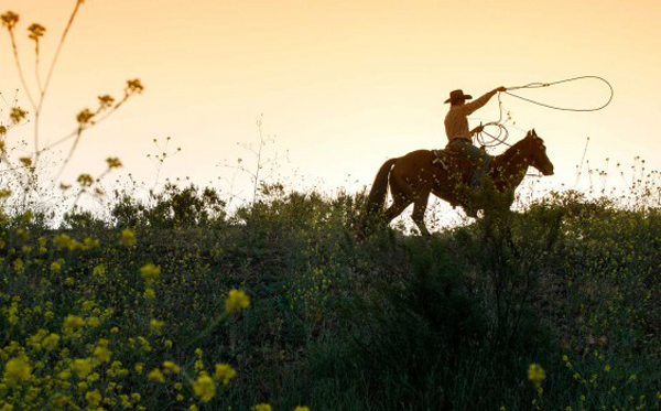 cowgirl swinging rope at alisal guest ranch