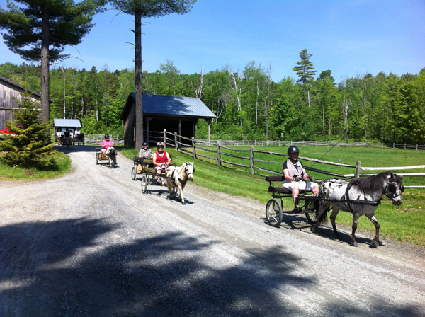 Sue Rogers Carriage Driving at Lands End Farm
