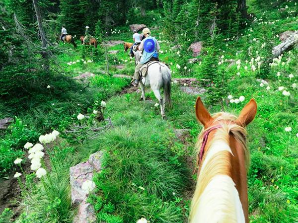 swan mountain horseback riding montana pack trip
