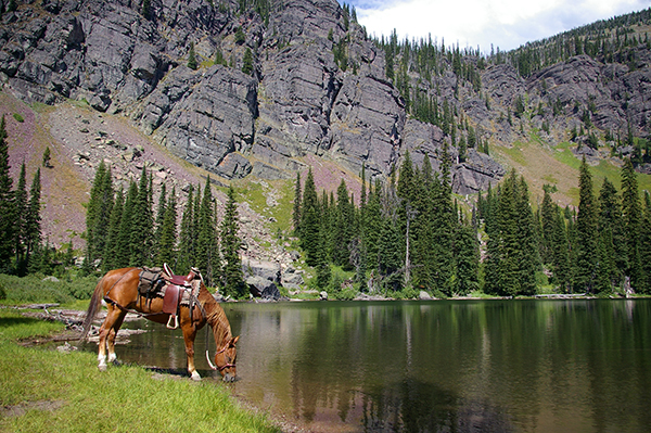 swan mountain outfitters montana horseback pack trips