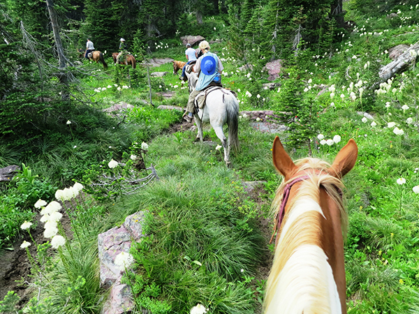 swan mountain outfitters montana horse pack trips