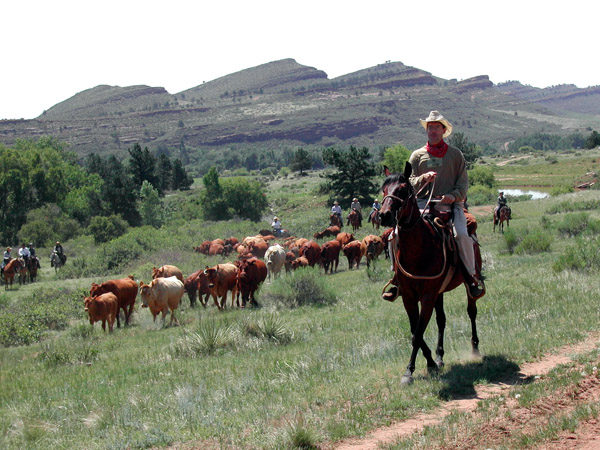 sylvan dale colorado cattle drive vacations