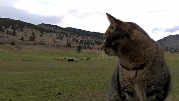 ranch cats sylvan dale