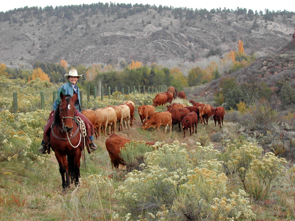 sylvan dale guest ranch cattle drives colorado