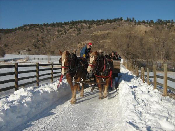 Horse Sleigh Ride Sylvan Dale