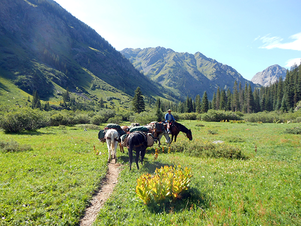 T Bar M Outfitters horse pack trips