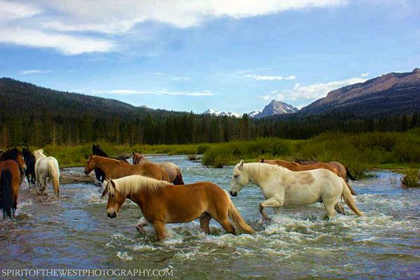 t cross ranch horseback riding