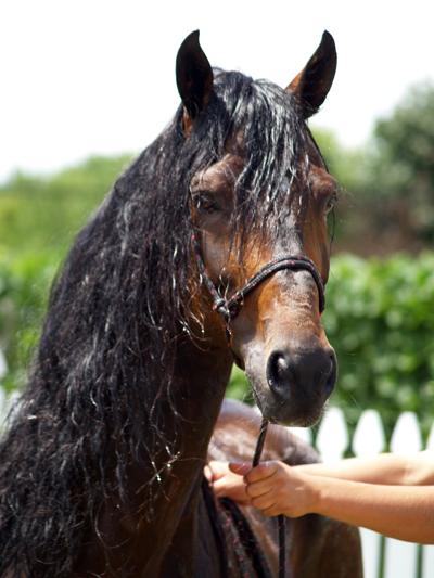 baiting hollow vineyard long island horse rescue