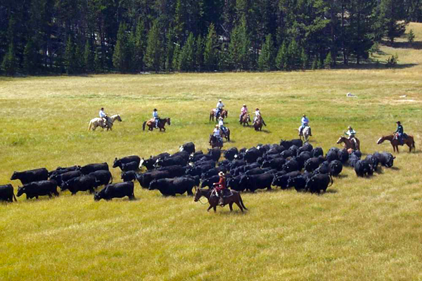 the hideout cattle drive corporate