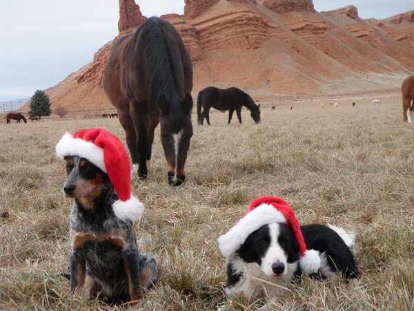 The Hideout Ranch Dogs in Santa Hats