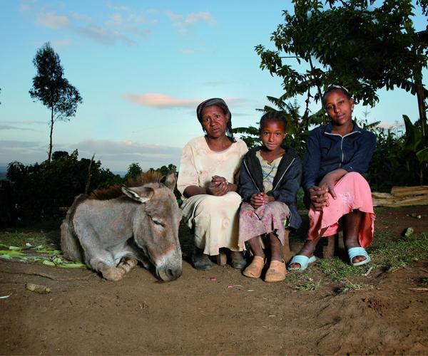 the brooke animal charity