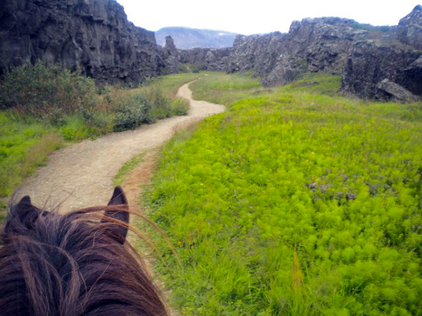 Thingvellir riding Iceland