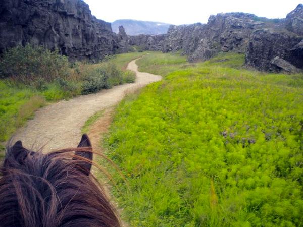 Thingvellir riding Iceland