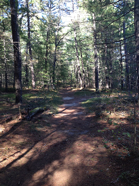 trail at myles standish state forest massachusetts