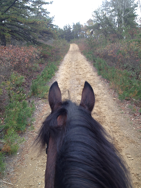 between the ears view horseback riding through myles standish state forest